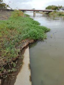 新利根川 水ひまわり